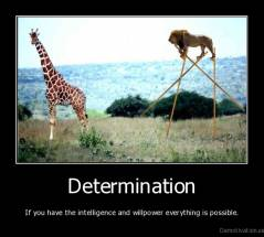Determination - If you have the intelligence and willpower everything is possible.