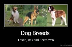 dog breeds lassie rex and beethoven