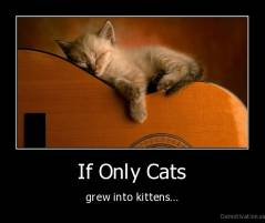 If Only Cats - grew into kittens...