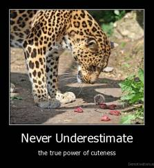 Never Underestimate - the true power of cuteness