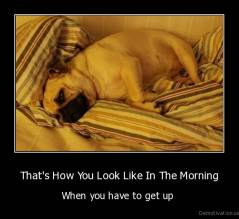 That's How You Look Like In The Morning - When you have to get up