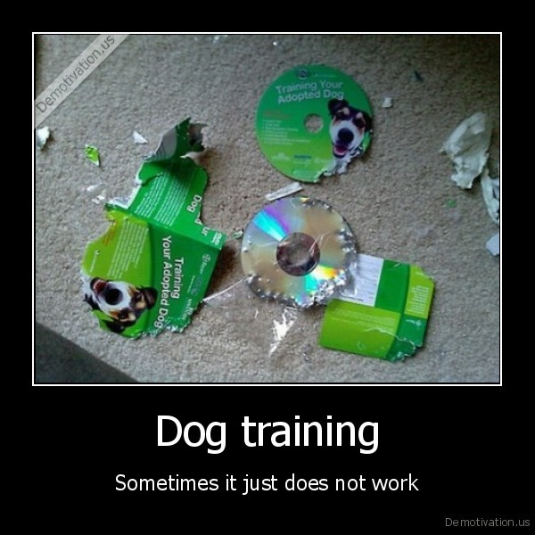 training,dog,sometimes
