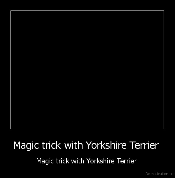 dog,york,yorkshire,terrier,magic,trick,funny