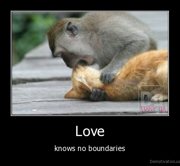 love,monkey,kitten,cat,monkey, kissing