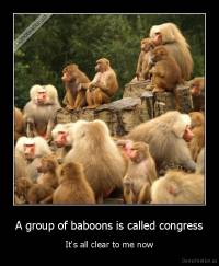 A group of baboons is called congress - It's all clear to me now