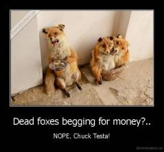 Dead foxes begging for money?.. - NOPE. Chuck Testa!