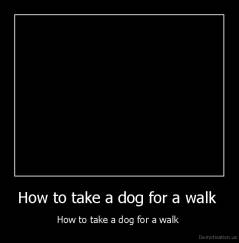 How to take a dog for a walk  - How to take a dog for a walk