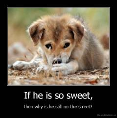 If he is so sweet, - then why is he still on the street?