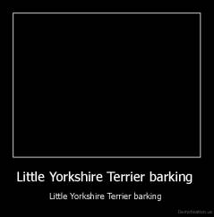 Little Yorkshire Terrier barking  - Little Yorkshire Terrier barking