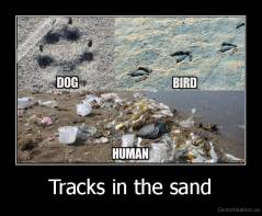 Tracks in the sand -