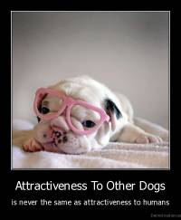 Attractiveness To Other Dogs - is never the same as attractiveness to humans