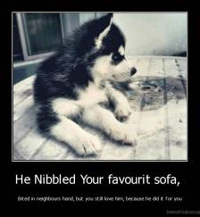 He Nibbled Your favourit sofa,  - Bited in neighbours hand, but you still love him, because he did it for you